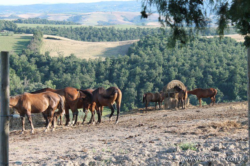 villa-gaudia_cavalos